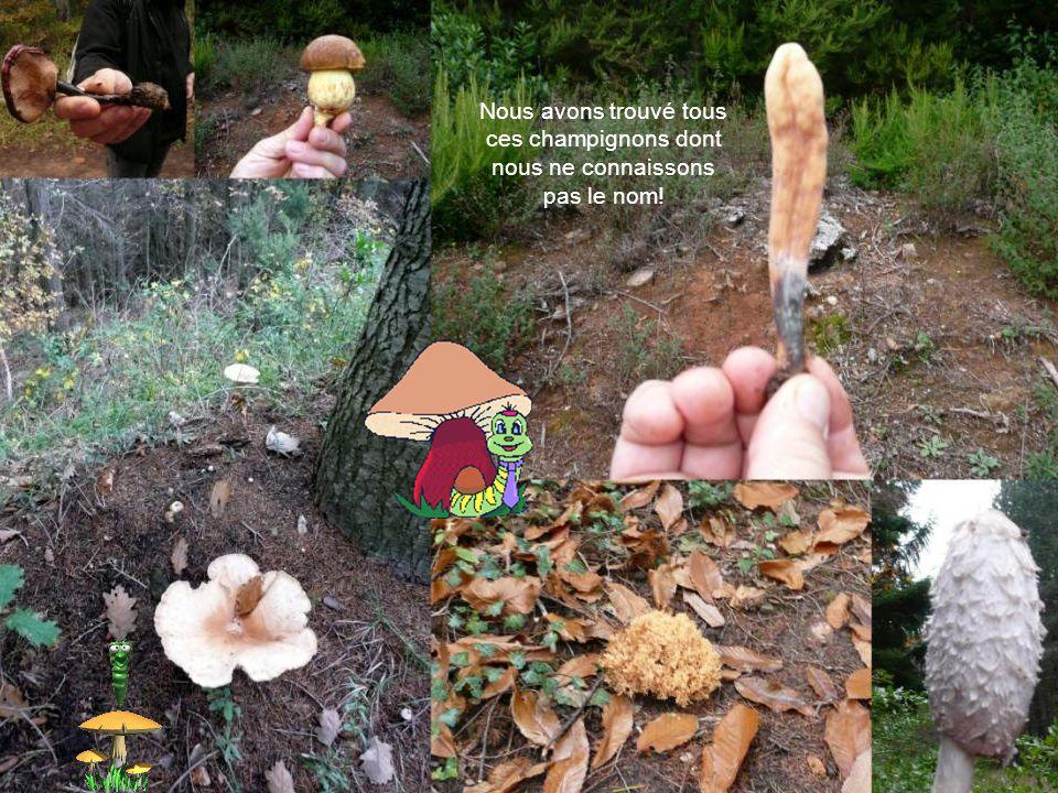 Nous avons trouvé tous ces champignons dont nous ne connaissons pas le nom!