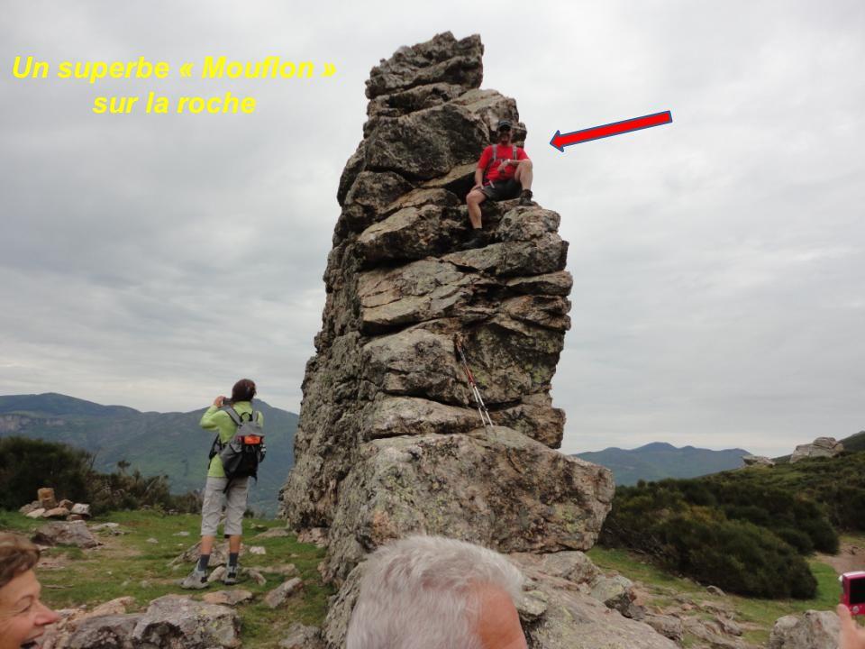Un superbe « Mouflon » sur la roche
