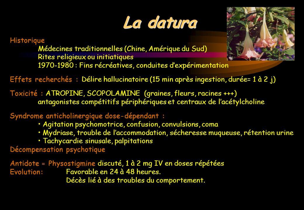 La daturaHistorique. Médecines traditionnelles (Chine, Amérique du Sud) Rites religieux ou initiatiques.
