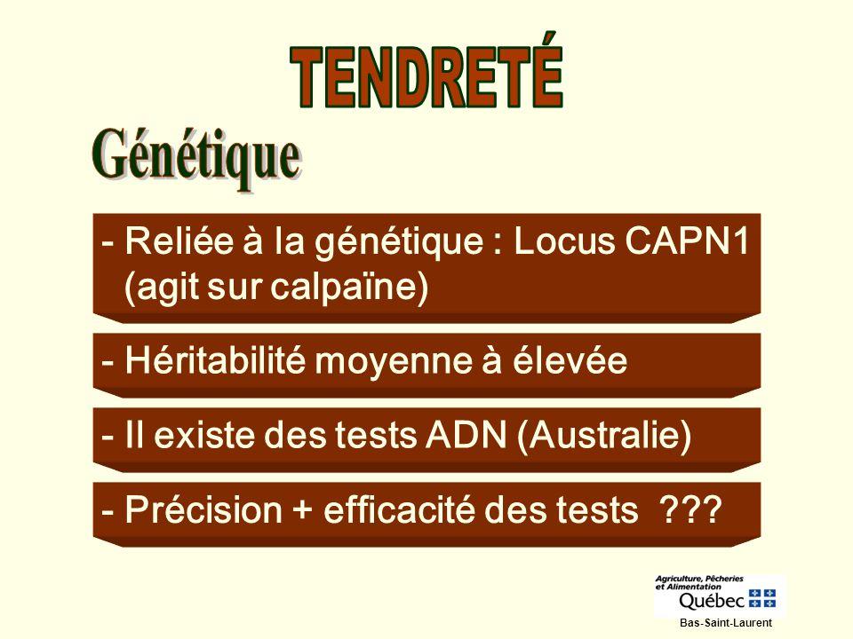 TENDRETÉ - Reliée à la génétique : Locus CAPN1 (agit sur calpaïne)