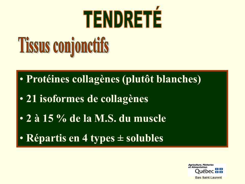TENDRETÉ Tissus conjonctifs Protéines collagènes (plutôt blanches)