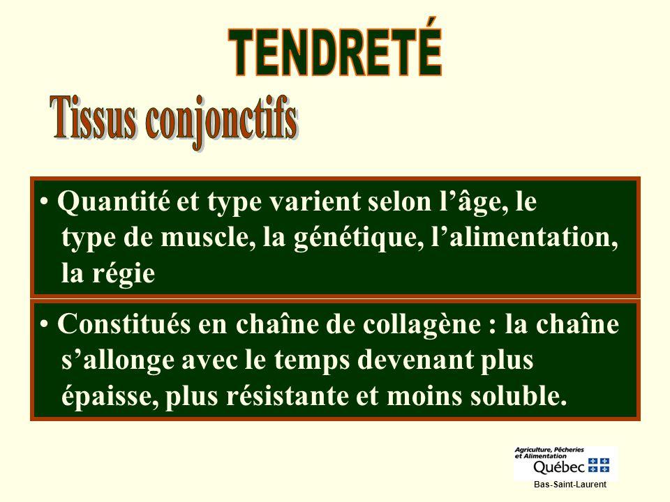 TENDRETÉ Tissus conjonctifs