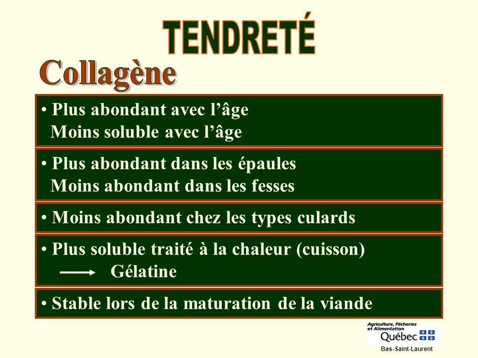 TENDRETÉ Collagène Plus abondant avec l'âge Moins soluble avec l'âge
