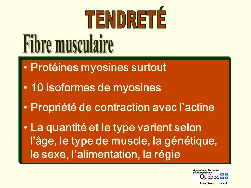 TENDRETÉ Fibre musculaire Protéines myosines surtout