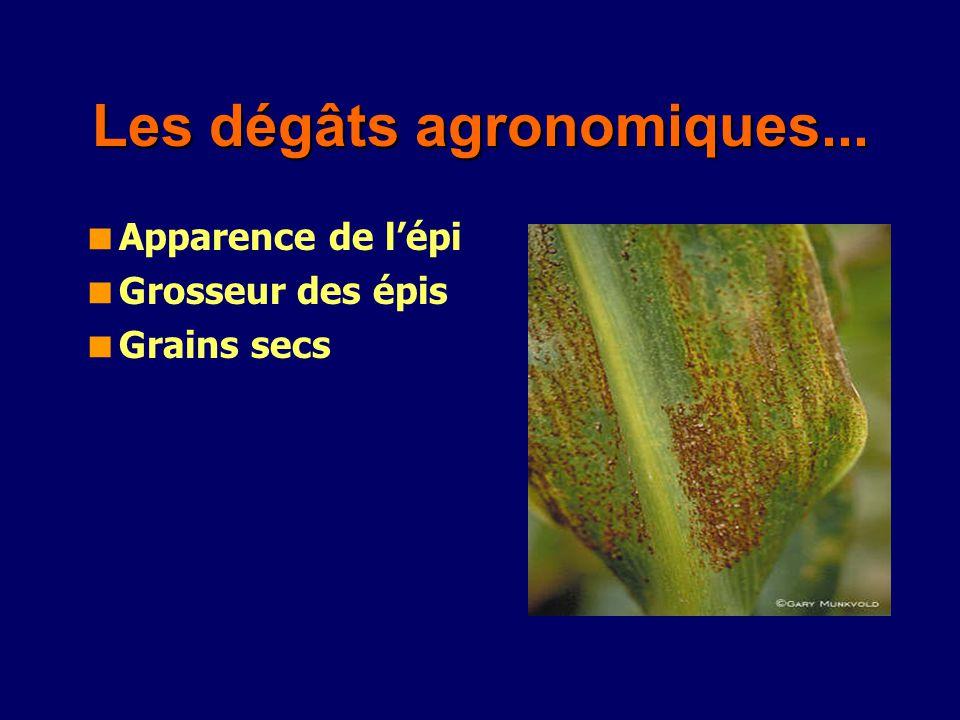 Les dégâts agronomiques...