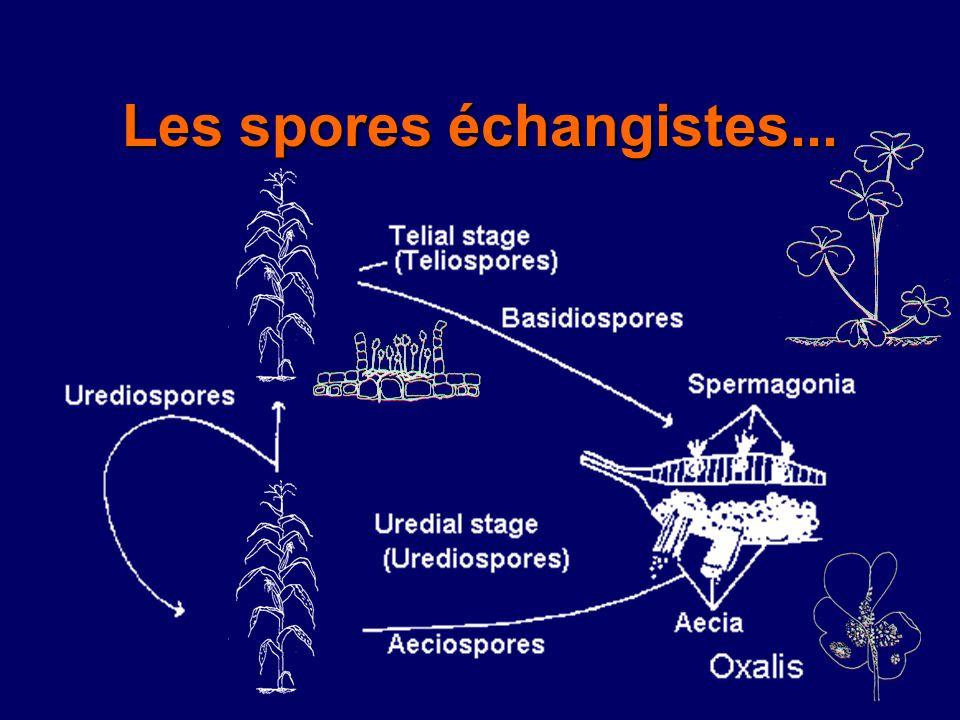 Les spores échangistes...