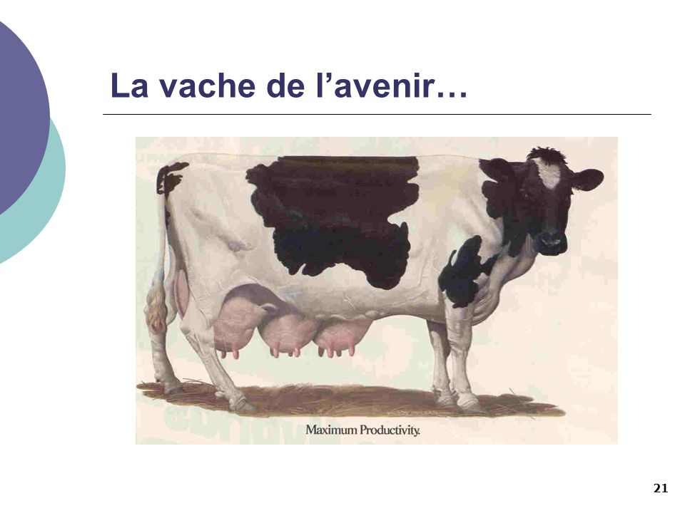 La vache de l'avenir…