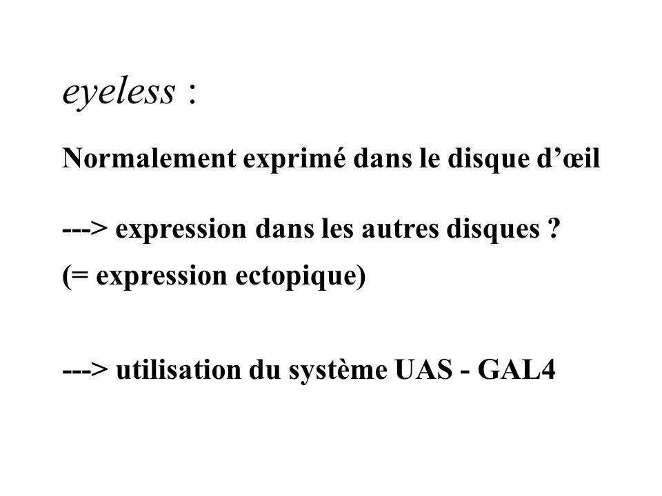 eyeless : Normalement exprimé dans le disque d'œil
