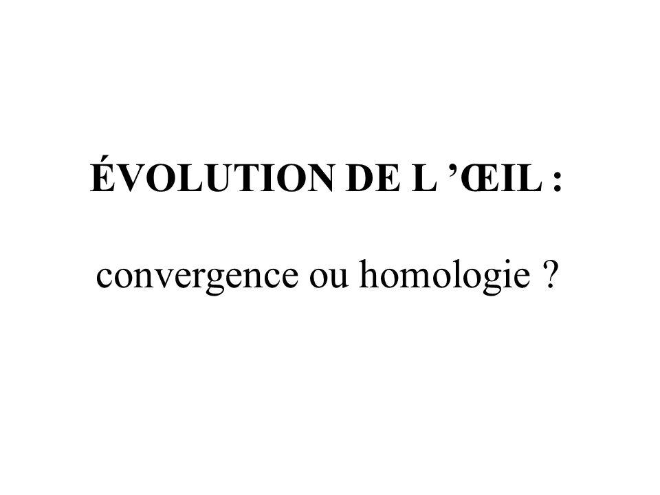 convergence ou homologie