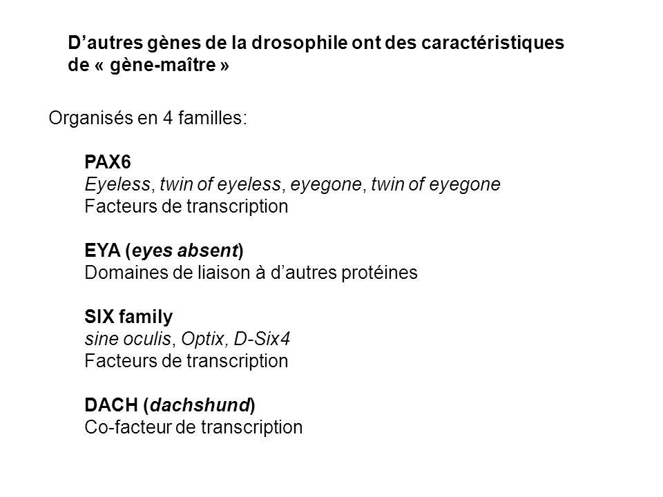 D'autres gènes de la drosophile ont des caractéristiques