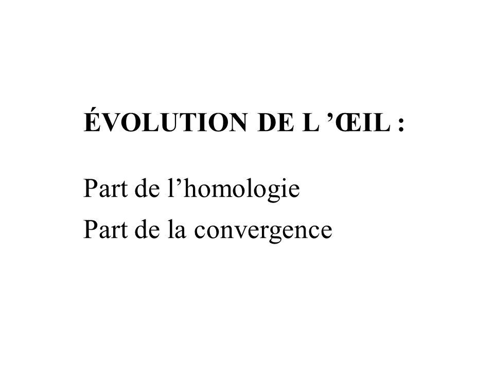 ÉVOLUTION DE L 'ŒIL : Part de l'homologie Part de la convergence