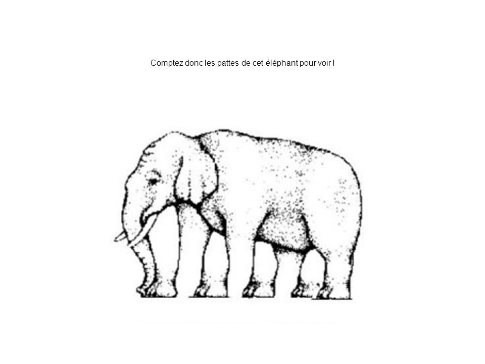 Comptez donc les pattes de cet éléphant pour voir !