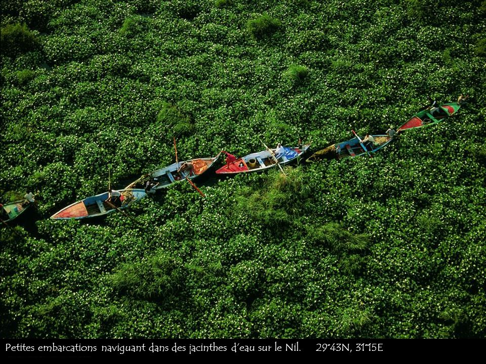 Petites embarcations naviguant dans des jacinthes d'eau sur le Nil