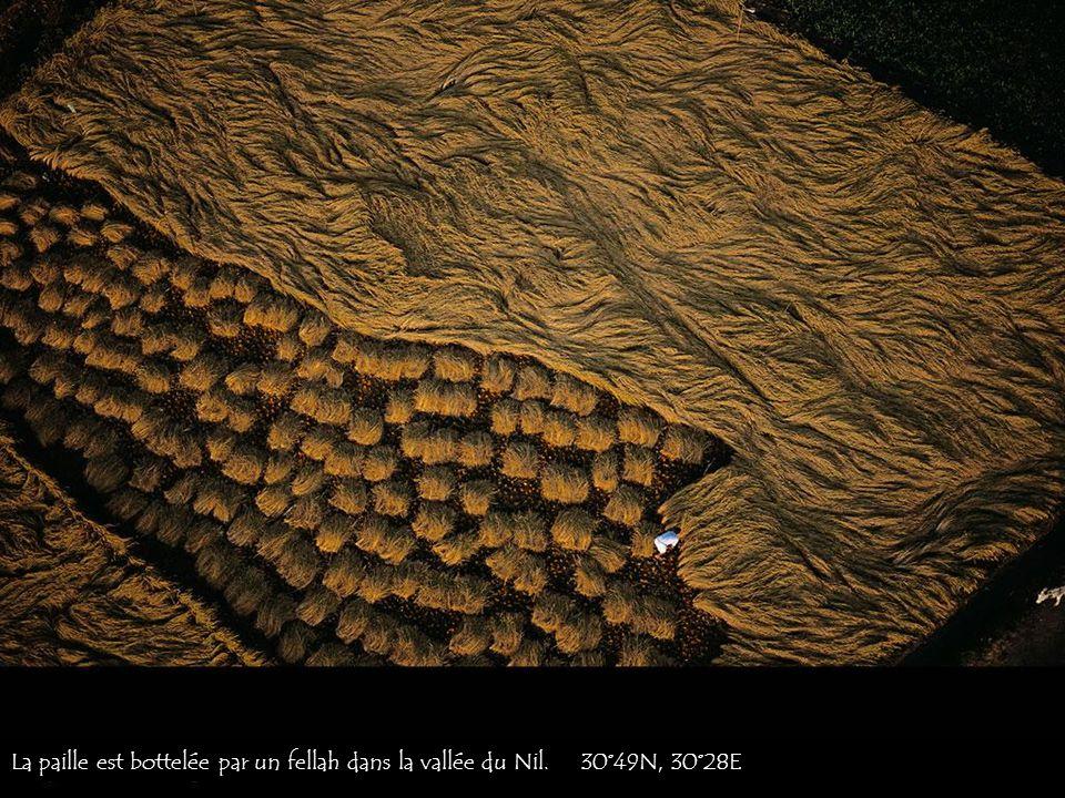 La paille est bottelée par un fellah dans la vallée du Nil