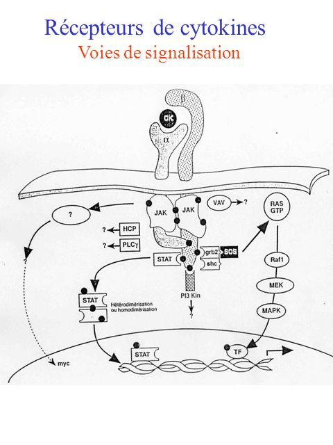 Récepteurs de cytokines