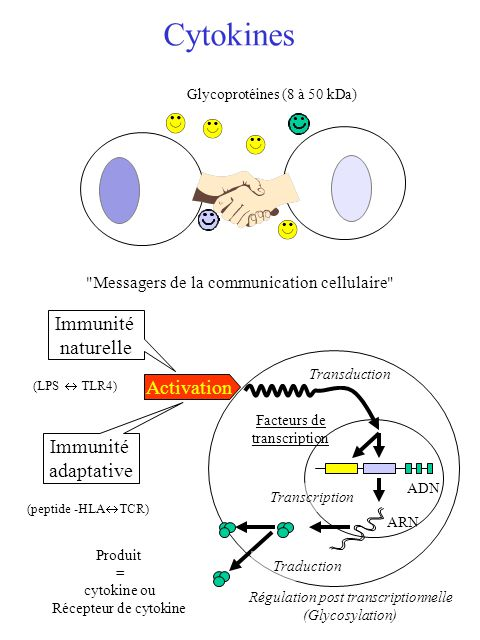 Régulation post transcriptionnelle