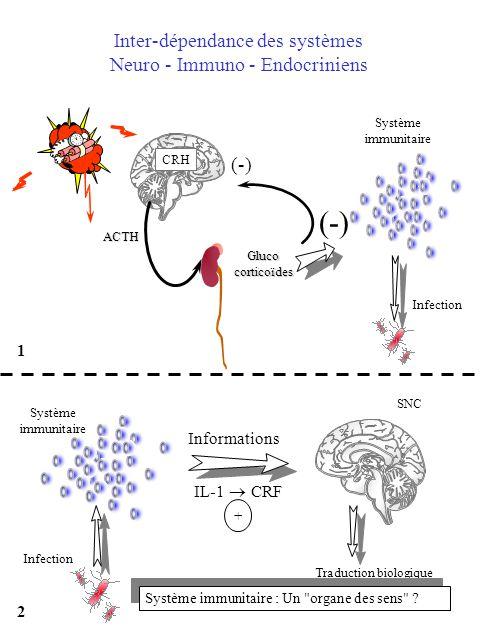 (-) Inter-dépendance des systèmes Neuro - Immuno - Endocriniens