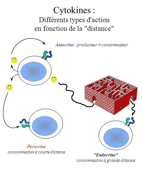 Cytokines : Différents types d action en fonction de la distance