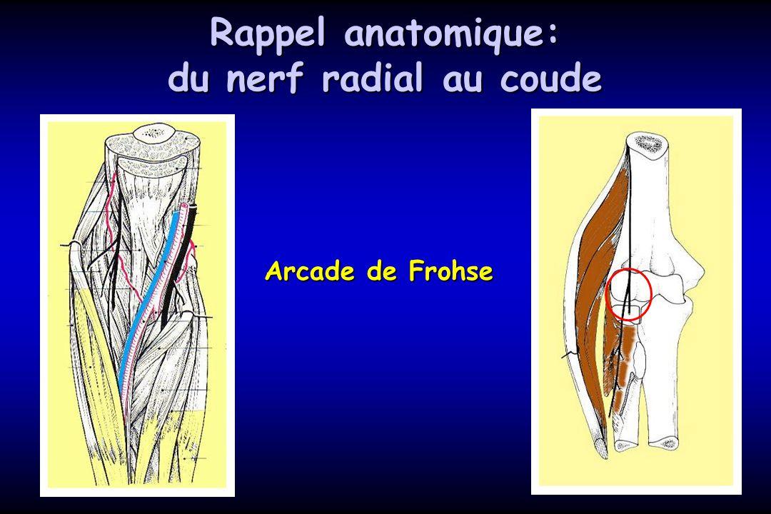 Rappel anatomique: du nerf radial au coude