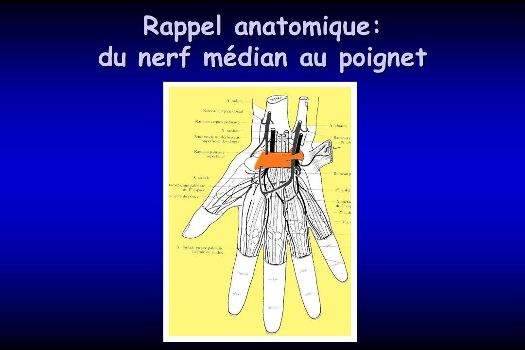 Rappel anatomique: du nerf médian au poignet