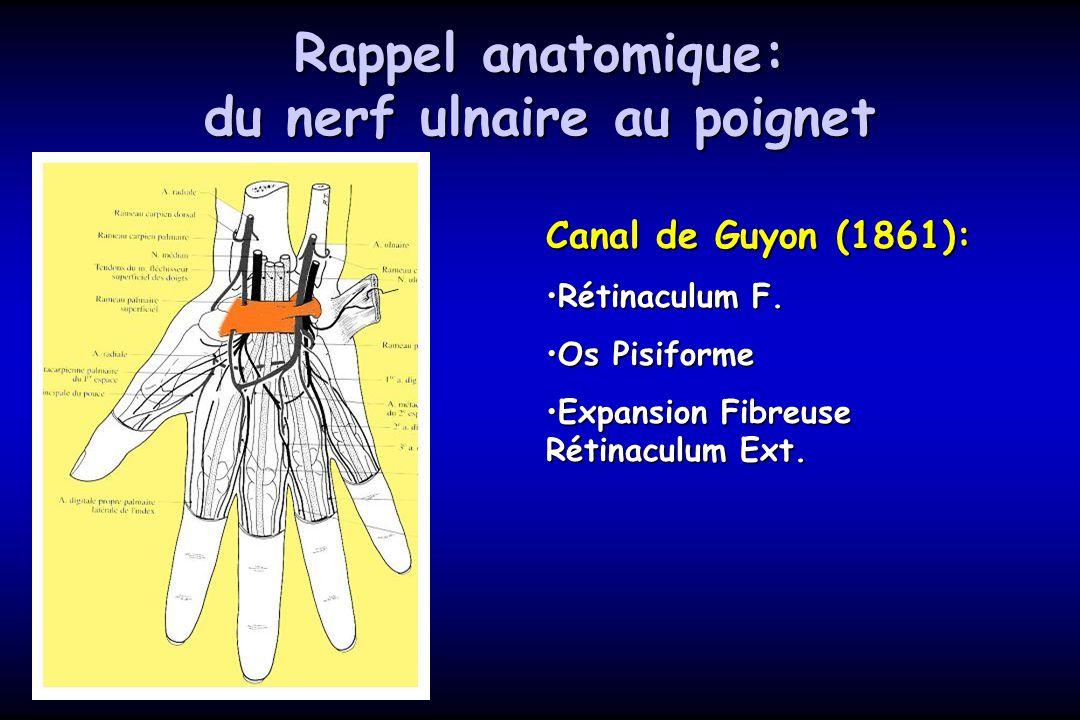 Rappel anatomique: du nerf ulnaire au poignet