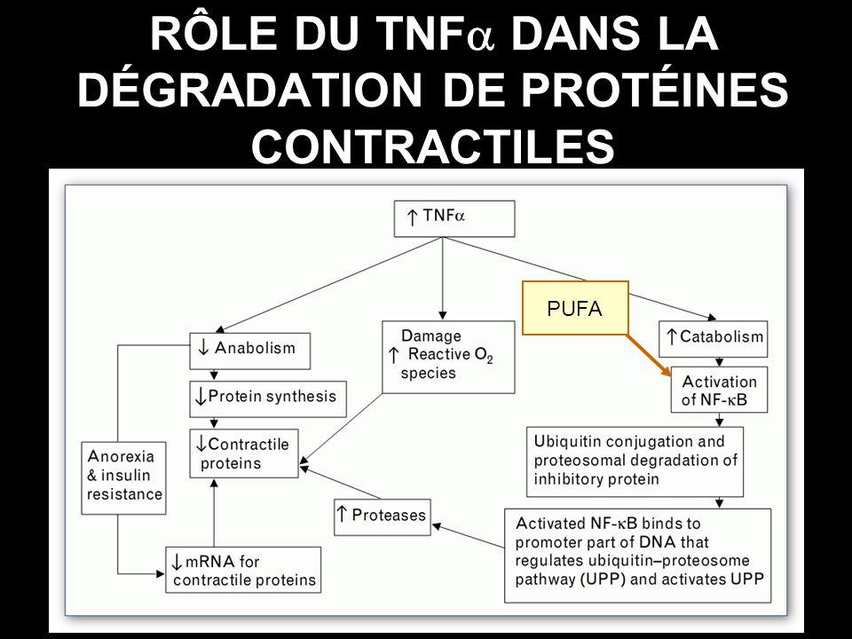 RÔLE DU TNF DANS LA DÉGRADATION DE PROTÉINES CONTRACTILES