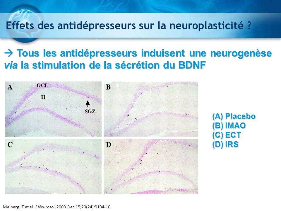 Effets des antidépresseurs sur la neuroplasticité