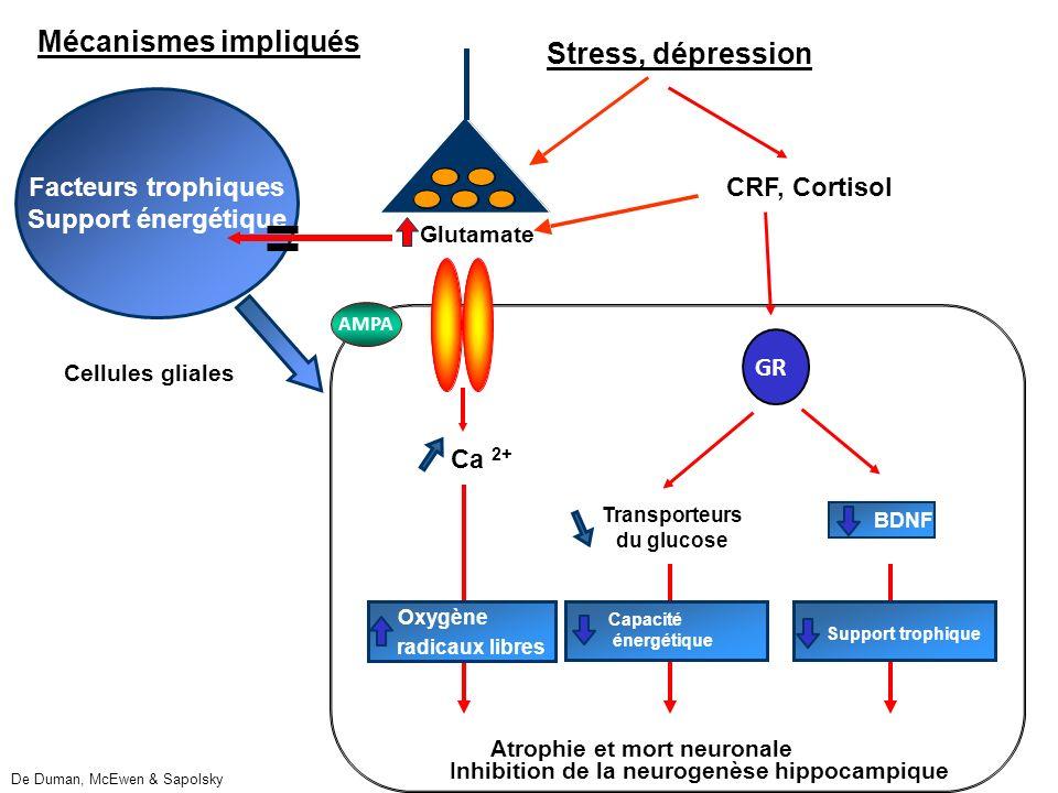 Transporteurs du glucose