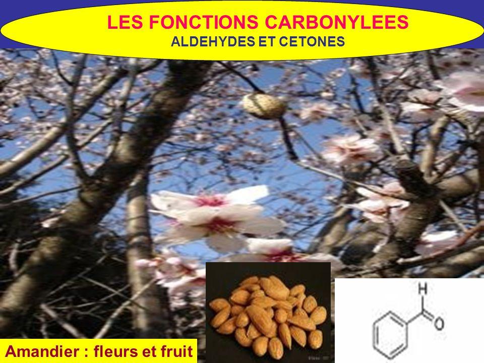 LES FONCTIONS CARBONYLEES Amandier : fleurs et fruit