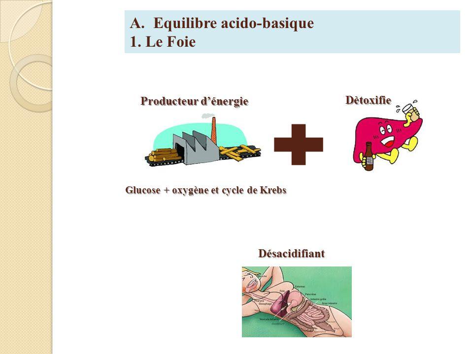 Glucose + oxygène et cycle de Krebs