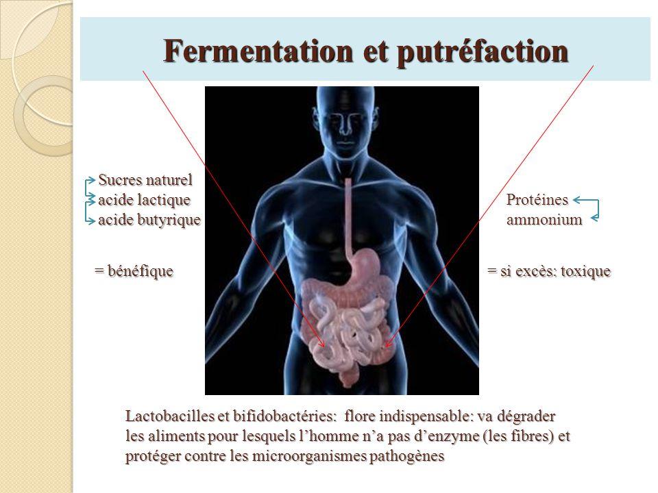 Fermentation et putréfaction