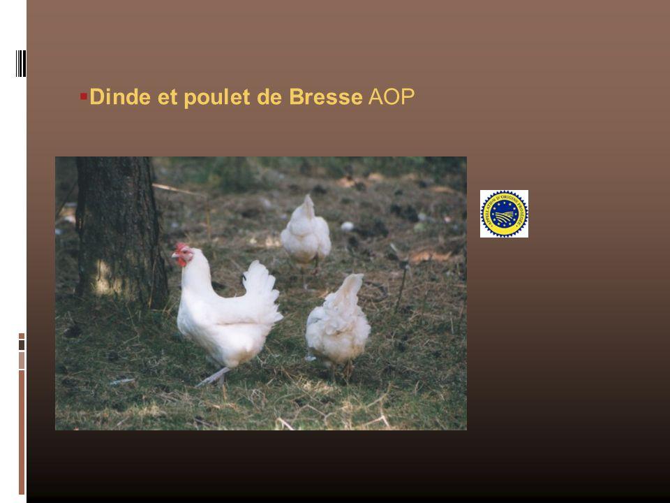 Dinde et poulet de Bresse AOP