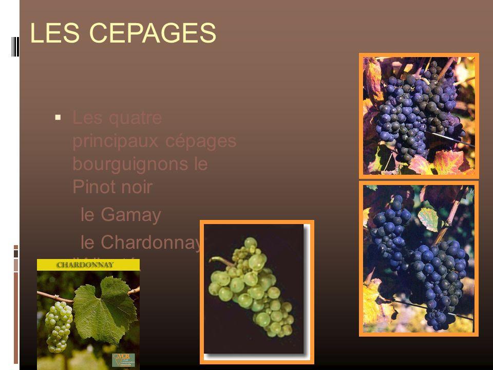 LES CEPAGES Les quatre principaux cépages bourguignons le Pinot noir