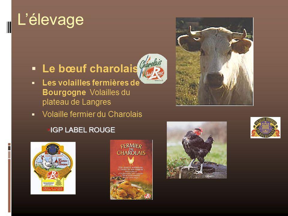 L'élevage Le bœuf charolais