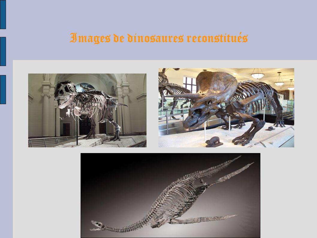 Images de dinosaures reconstitués