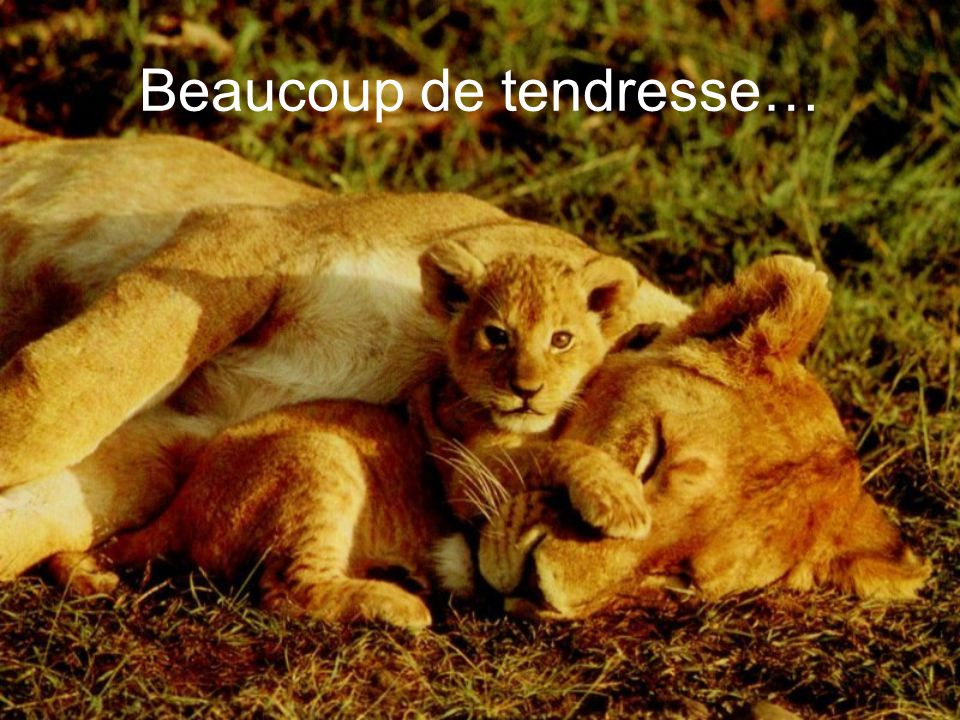 Beaucoup de tendresse…