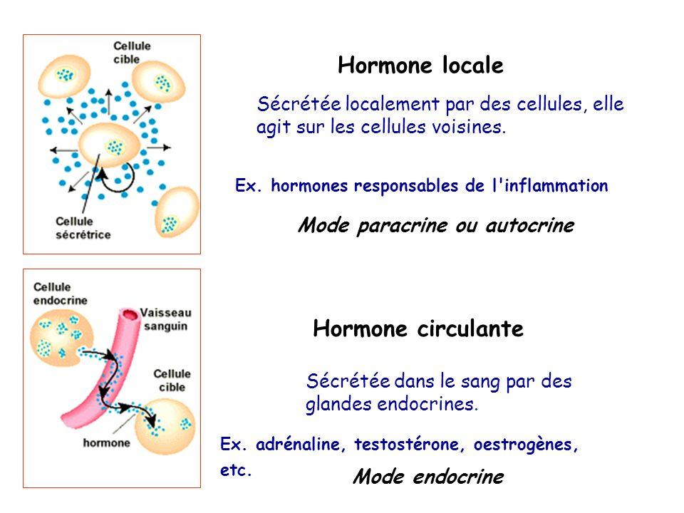 Hormone locale Hormone circulante Mode paracrine ou autocrine