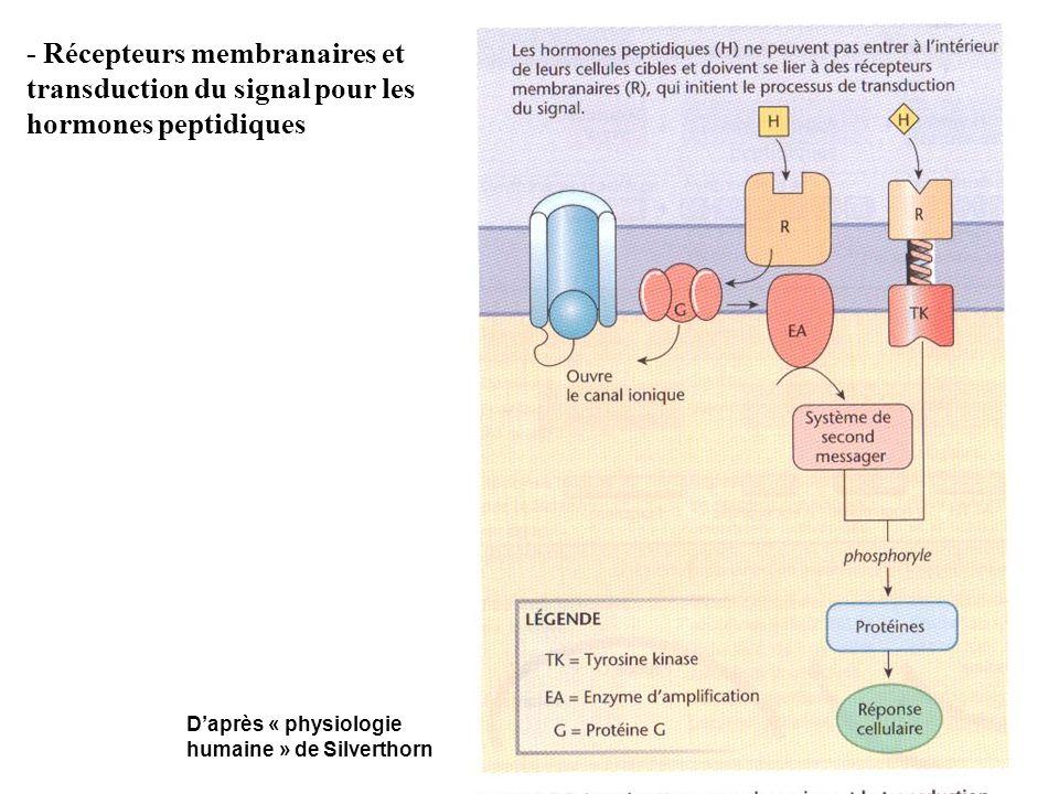 - Récepteurs membranaires et transduction du signal pour les hormones peptidiques