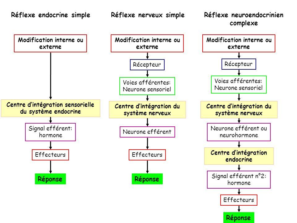 Réflexe neuroendocrinien complexe