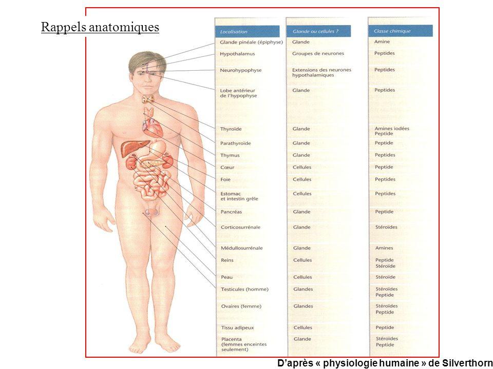 Rappels anatomiques D'après « physiologie humaine » de Silverthorn