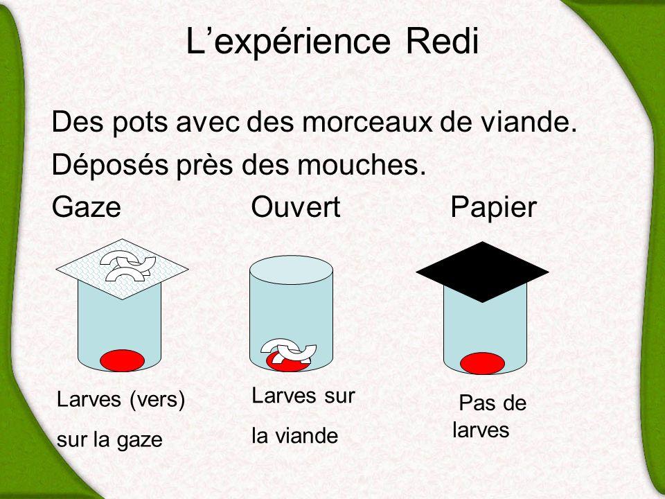 L'expérience Redi Des pots avec des morceaux de viande.