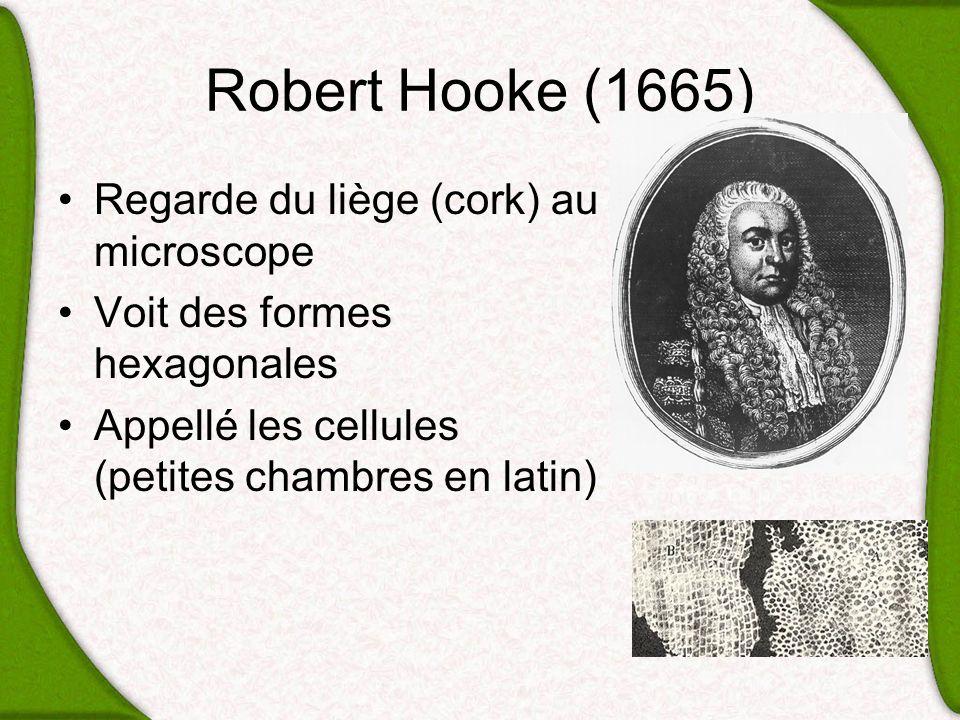 Robert Hooke (1665) Regarde du liège (cork) au microscope