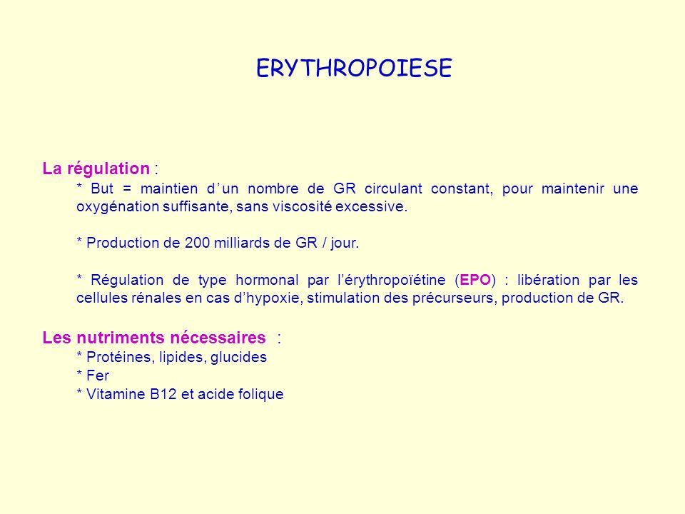 ERYTHROPOIESE La régulation : Les nutriments nécessaires :