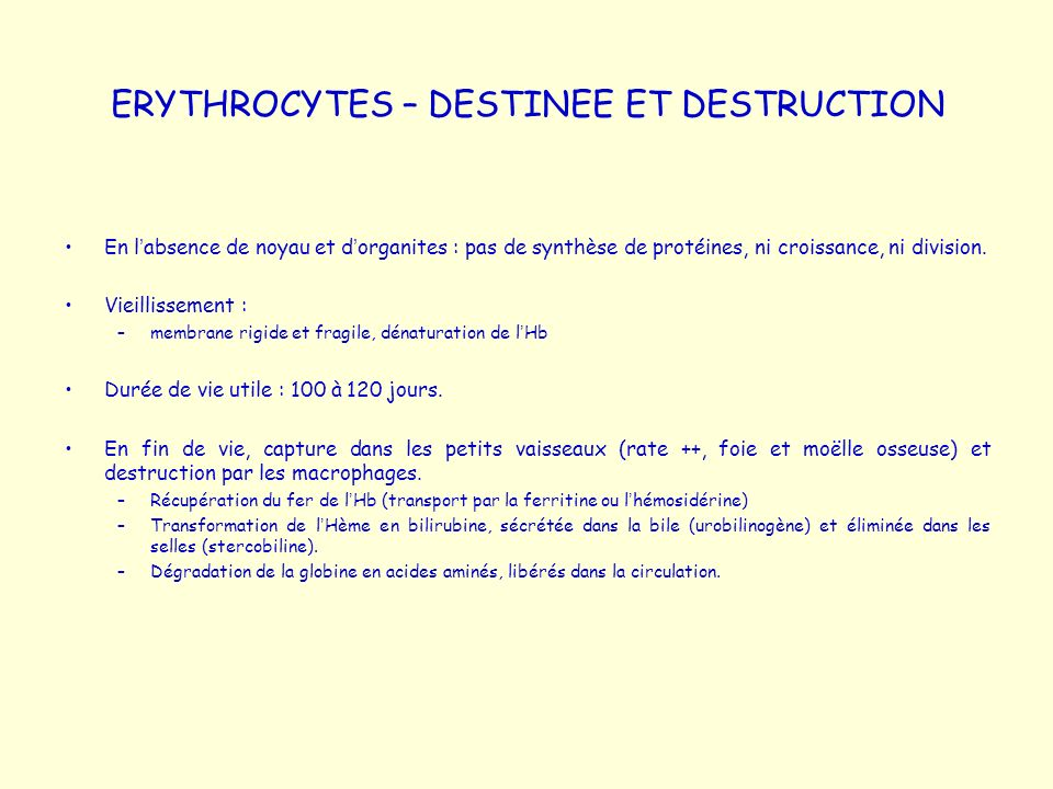 ERYTHROCYTES – DESTINEE ET DESTRUCTION