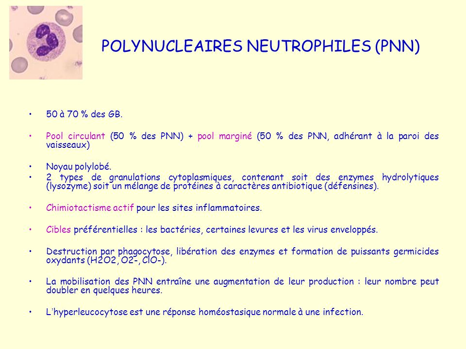 POLYNUCLEAIRES NEUTROPHILES (PNN)