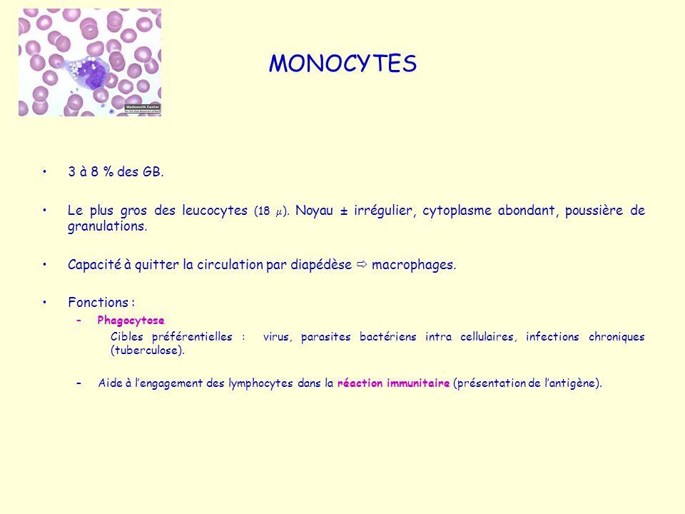 MONOCYTES 3 à 8 % des GB. Le plus gros des leucocytes (18 m). Noyau ± irrégulier, cytoplasme abondant, poussière de granulations.