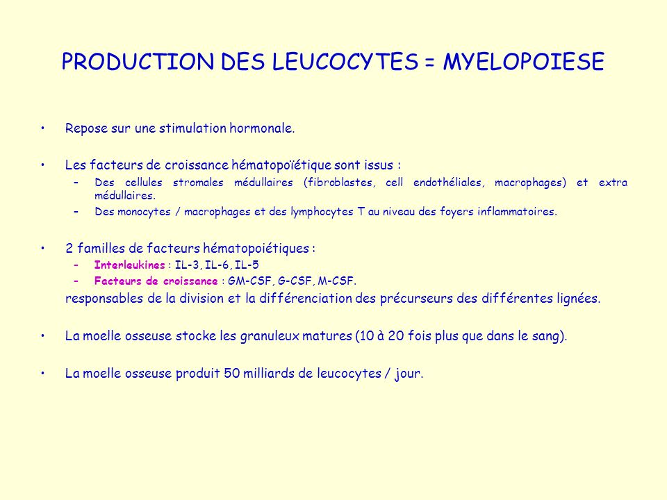 PRODUCTION DES LEUCOCYTES = MYELOPOIESE