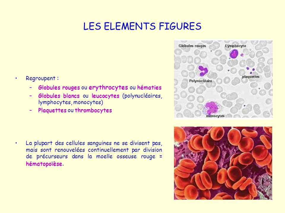 LES ELEMENTS FIGURES Regroupent :