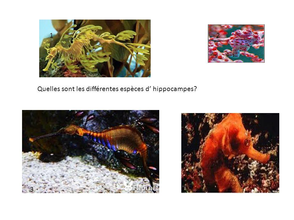 1 2 Quelles sont les différentes espèces d' hippocampes 3 4