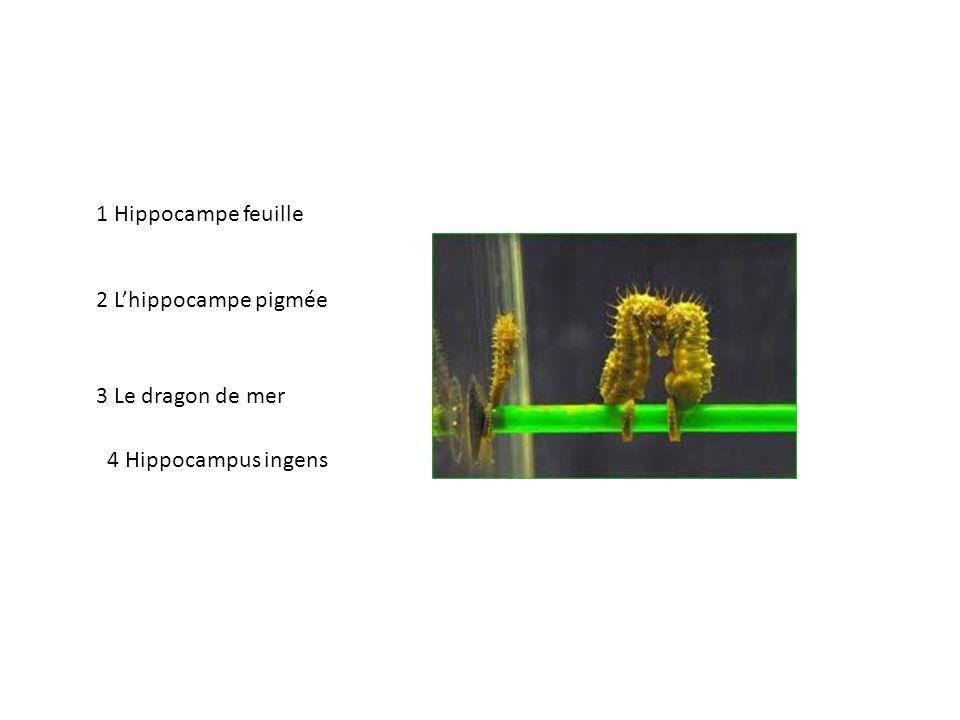 1 Hippocampe feuille 2 L'hippocampe pigmée 3 Le dragon de mer 4 Hippocampus ingens
